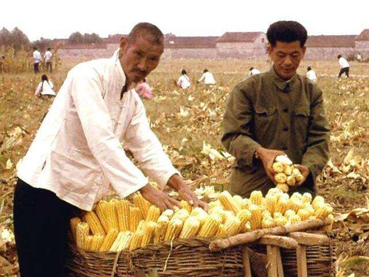 history of corn sheller